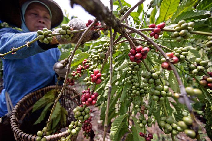coffee-grow01