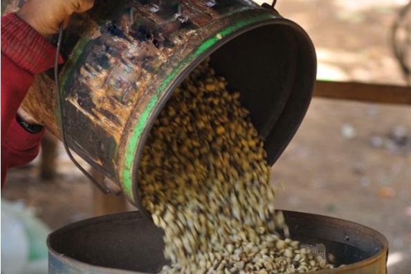 コーヒー精製方法