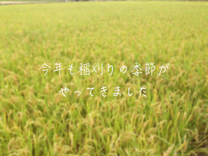 今年も稲刈りの季節がやってきました