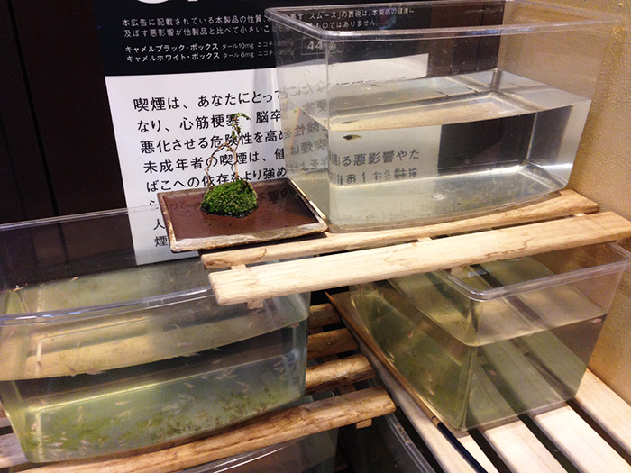 yamamoto07